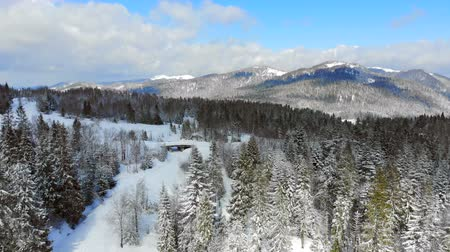 idílico : Panorama of the mountain range with trees covered with snow in Sunny weather. Winter view of the Carpathian mountains
