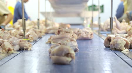 Chickens fall on the track for distribution between workers and boning. Chicken boning and separation of chickens into parts.