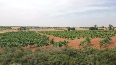 célere : View from the high-speed train through the window on the magnificent scenery of Spain. View from the train window of vineyards, trees, and arid terrain.