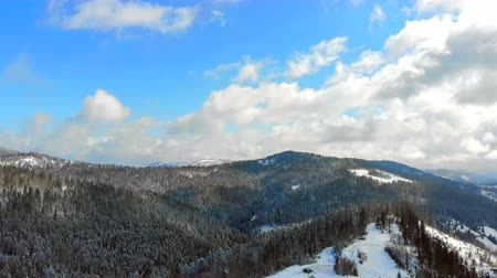 karpaty : Panorama of the mountain range with trees covered with snow in Sunny weather. Winter view of the Carpathian mountains