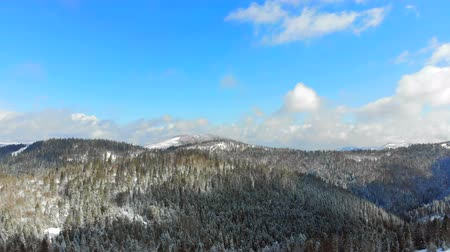 ladin : Panorama of the mountain range with trees covered with snow in Sunny weather. Winter view of the Carpathian mountains