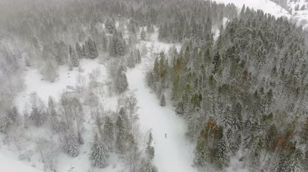 ohrid : Aerial drone shot of Skiers pass the track in winter in the fabulous mountains. The forest is covered with snow and piste skiing