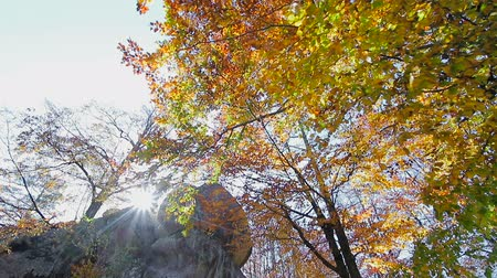 outubro : Autumn sun shines through the leaves and the rock of stone. Movement cameras and glance with bottom in the upper hand on autumn leaves on the tree