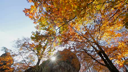 relance : Autumn sun shines through the leaves and the rock of stone. Movement cameras and glance with bottom in the upper hand on autumn leaves on the tree
