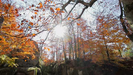 outubro : The rays of the autumn sun Shine through the autumn leaves of yellow and red . Movement cameras and glance with bottom in the upper hand on autumn leaves on the tree Stock Footage