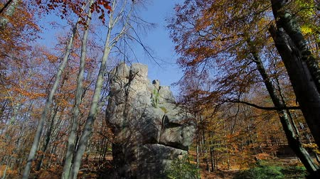 outubro : Autumn forest. Yellowed leaves on the trees. View the camera in the top and move forward. Rocks of stone in the forest among the autumn trees.
