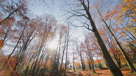 outubro : Autumn in the Park. Camera movement in the autumn Park. Look at the autumn leaves on the bottom to the top Stock Footage