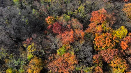 boomtoppen : Aerial view on top amazingly beautiful autumn colors,forests,trees, aerial drone flyover view.