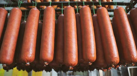 processed : Sausage which is suspended on the shelves, dries in the storage room. Panorama of the sausage which is suspended on laces in the refrigerator. Stock Footage