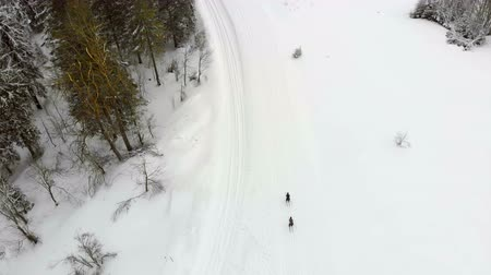 narciarz : Aerial view from the top, athletes the skiers overcome distance on skis passing by posted route from China and red chips.