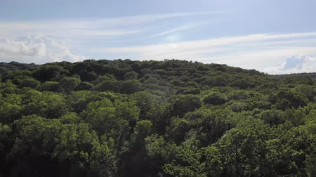 kanadai : beautiful forest shot from a quadrocopter. Nature aerial view, flying over lush pine tree forest.