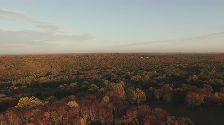 4K AERIAL HORIZON of New England forest in Autumn Stok Video