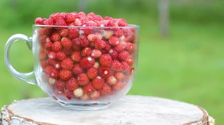 Harvest of Wild Strawberries in a Glass Mug Outdoors Vídeos
