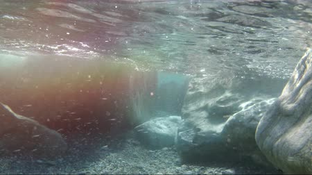 salyangoz : Light underwater, stone and wild Stok Video