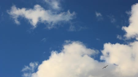 Seagull flies in the sky and clouds