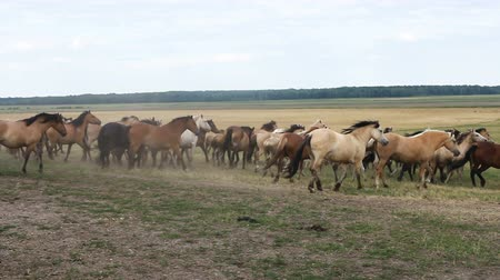 corral : A herd of horses walk around the field