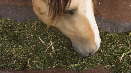 stallion : The horse eats feed from the trough