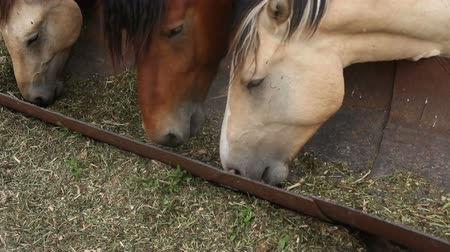 stabilní : Hungry horses in the pen