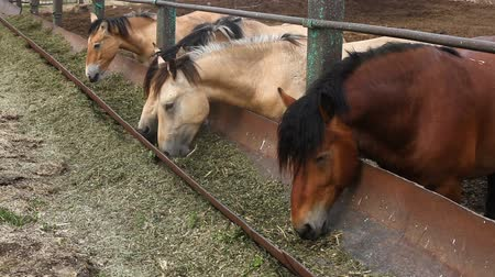 padok : Horses eat feed from the trough