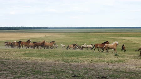 зажим : A herd of horses running around in the pasture field