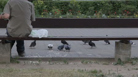 жесткий : A man feeds pigeons with bread on the street Стоковые видеозаписи