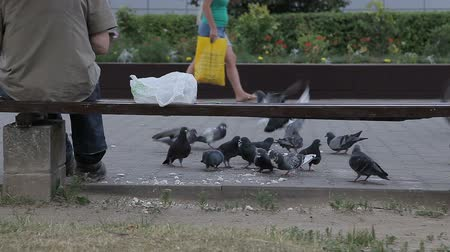 hejno : A man is feeding pigeons on the street
