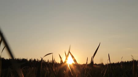 깊이 : Sunset in the field 무비클립