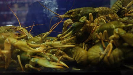 antenas : Live crayfish in a shop for sale, cooking crayfish