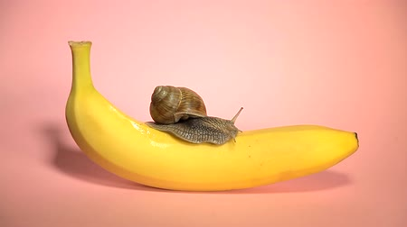 ползком : A snail crawling on a banana on a background of pink