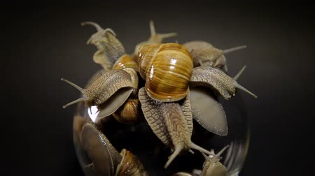 ползком : Snails crawl out of a glass vase on a black background