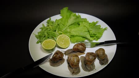 caracol : Live Snails on a plate with greens and lime, eating snails.
