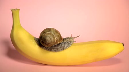 banan : Bright yellow banana on a pink background. Top view