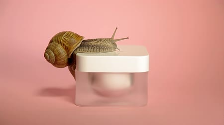 ползком : Skin care cosmetics with snail mucus. One snail climbing cosmetic cream on a pink background