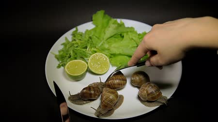 основное блюдо : Live Snails on a plate with greens and lime, eating snails.