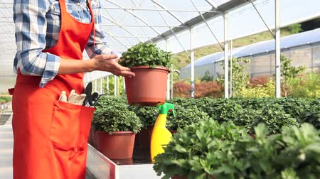 treatmen : woman at work in greenhouse with spray, care plants to growth