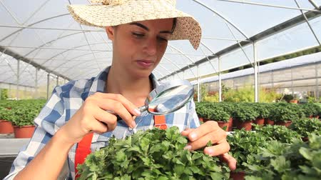treatmen : woman at work in greenhouse with magnifying glass, care plants to growth Stock Footage