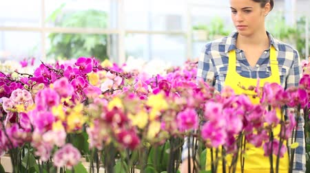 orchidea : woman walking in the garden of flowers, touches orchids Wideo