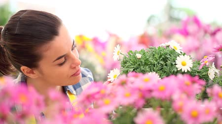 smell : springtime smiling woman smells the daisies in flowers garden Stock Footage