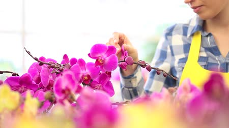 orchideák : woman walking in the garden of flowers, touches orchids Stock mozgókép