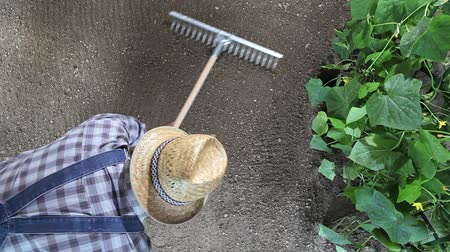 farmer working with rake in vegetable garden, top view and copy space template. Dostupné videozáznamy