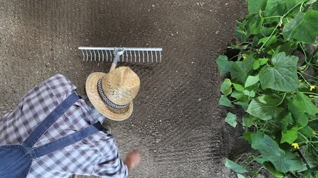 farmer working with rake in vegetable garden, top view and copy space template. Stock mozgókép