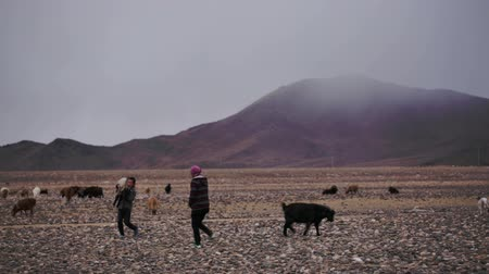 goatherd : Deluun, Mongolia - November 9, 2015: Life in harsh Mongolian territory, large areas with poor vegetation for agriculture. Mother and son go through desert Mongolian hills. Boy carries goat in his arms