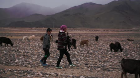 goatherd : Deluun, Mongolia - November 9, 2015: Life in the harsh Mongolian territory, large areas with poor vegetation for agriculture. Mother and son go through desert Mongolian hills. Woman carrying a goat