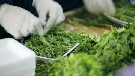 importação : Packaging of arugula leaves in a container. Employee working with gloves in transport company supplier of food. Close up indoors. Trader of retail and wholesale trade. Trading for resale