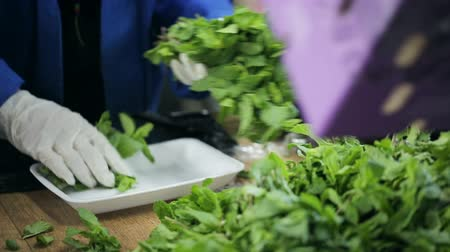 exportação : Packaging of mint leaves into a container. Employee working with gloves in transport company of food. Mint fresh and flavorful. Sale by providers of healthy food. Trader of retail and wholesale trade