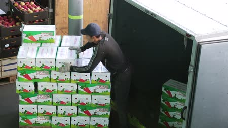 перевозка груза : Russia, Novosibirsk - July 25, 2015: Emploee of transport company unload boxes of goods from trailer of truck. Order for carriage for eat. Company import foodstuffs for resale. Boxes with apples