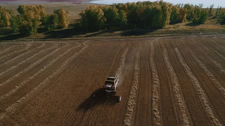 Harvest Natural Working at Dry Area. Good Fresh Spikes after Growing Crops. Sunny Gold of Growth at Ripe Rural Meadow with Blue Sky. Modern Industrial Truck of Cutting Farmer. Top Bird Eye by Copter Stock mozgókép