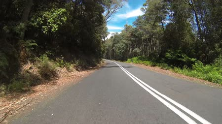 tasmania : A car driving through a forest in Tasmania, Australia. Camera on front of car.