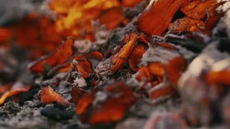 slash and burn : burning charcoal