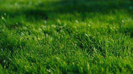 çim : Green grass for background
